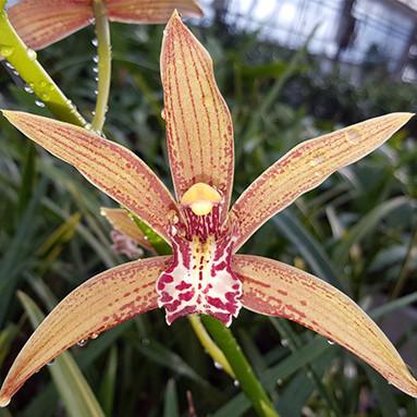Botanical Species
